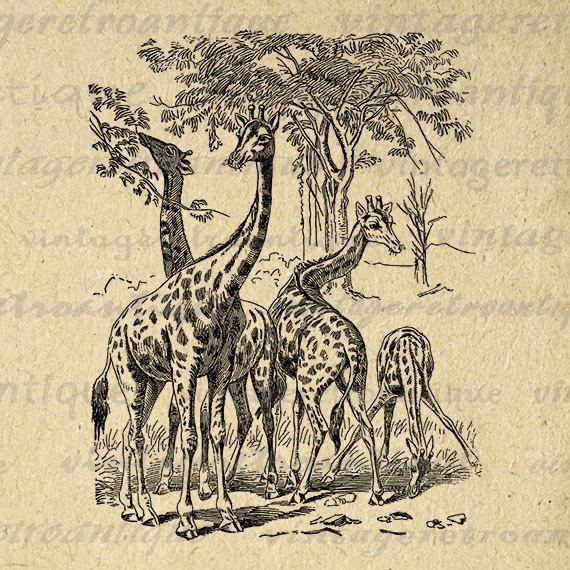 Giraffe Printable Graphic Digital Giraffes Illustration Image Download Vintage Clip Art Jpg Png Eps 18x18 HQ 300dpi No.2637 @ vintageretroantique.etsy.com #DigitalArt #Printable #Art #VintageRetroAntique #Digital #Clipart #Download