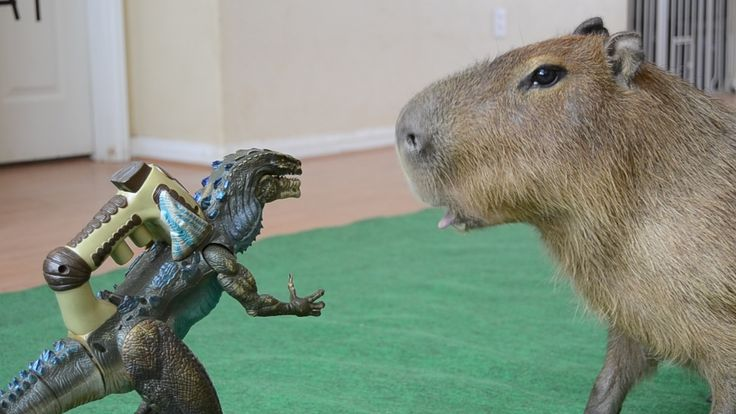 This is what the world's largest rodent thinks of Godzilla! http://ift.tt/2d9Ydqn