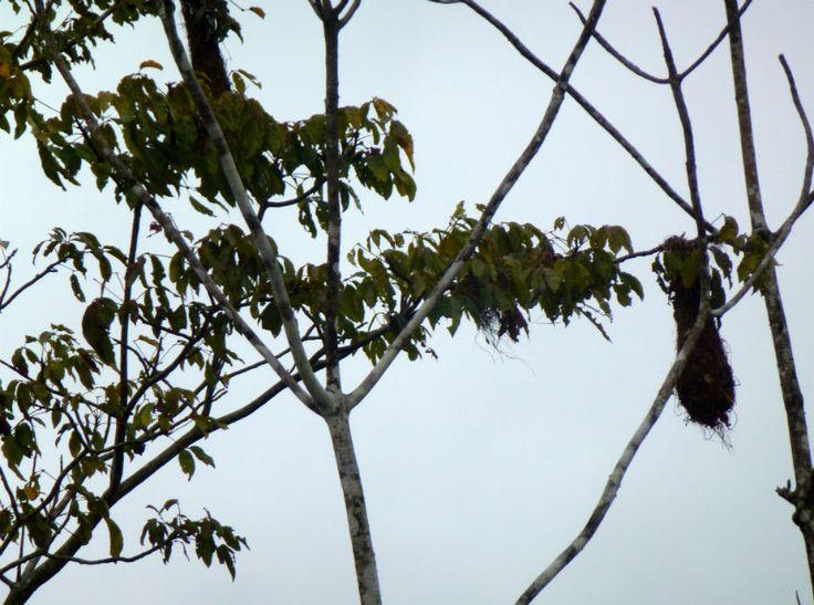 nests #AmazonAdventure #AtoZChallenge N: Nobody eats grubs or #insects #Humanenterophagy