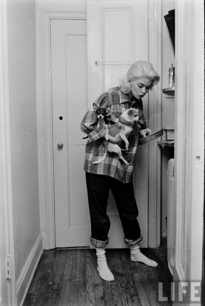 Jayne Mansfield in a Pendleton wool Board shirt. With chihuahuas. Cooking breakfast, because that's how all chihuahua owners cook their eggs.