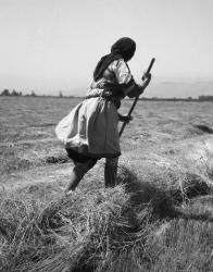 Καραγκούνα κόβοντας χόρτο στην Καρδίτσα 1965. Φωτογράφος Τάκης Τλούπας http://takis.tloupas.gr/