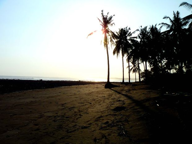 Palm Trees. Summer. Medway Beach, West Bali, Indonesia.