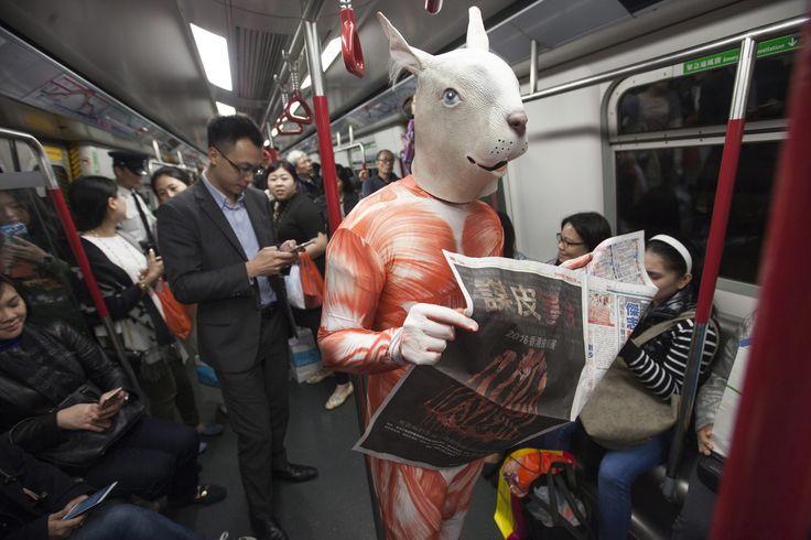 Około 100 aktywistów działających w obronie zwierząt protestowało w oryginalny sposób w Hongkongu podczas międzynarodowych targów futrzarskich, jakie odbyły się na koniec lutego. (fot. PAP/EPA/ALEX HOFFORD)