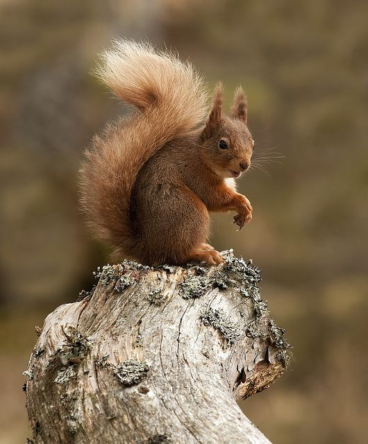 Squirrel .....Are you the rascal that teases the dog and shares her food?