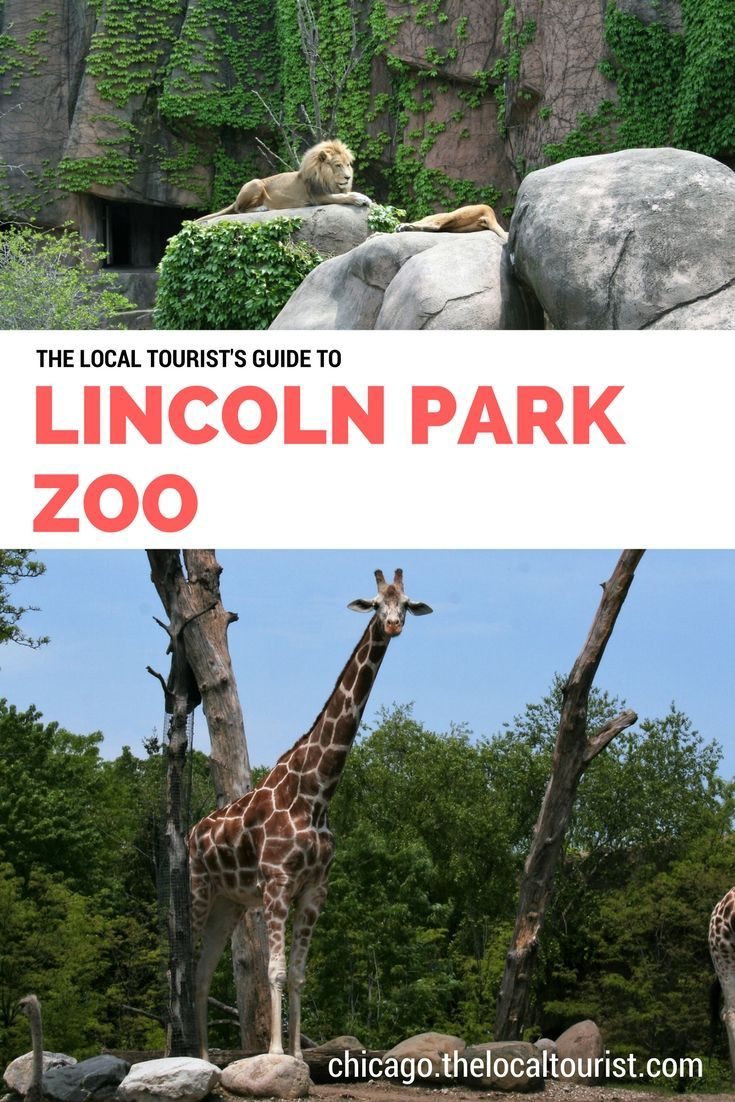 Chicagos lincoln park zoo is one of the oldest zoos in