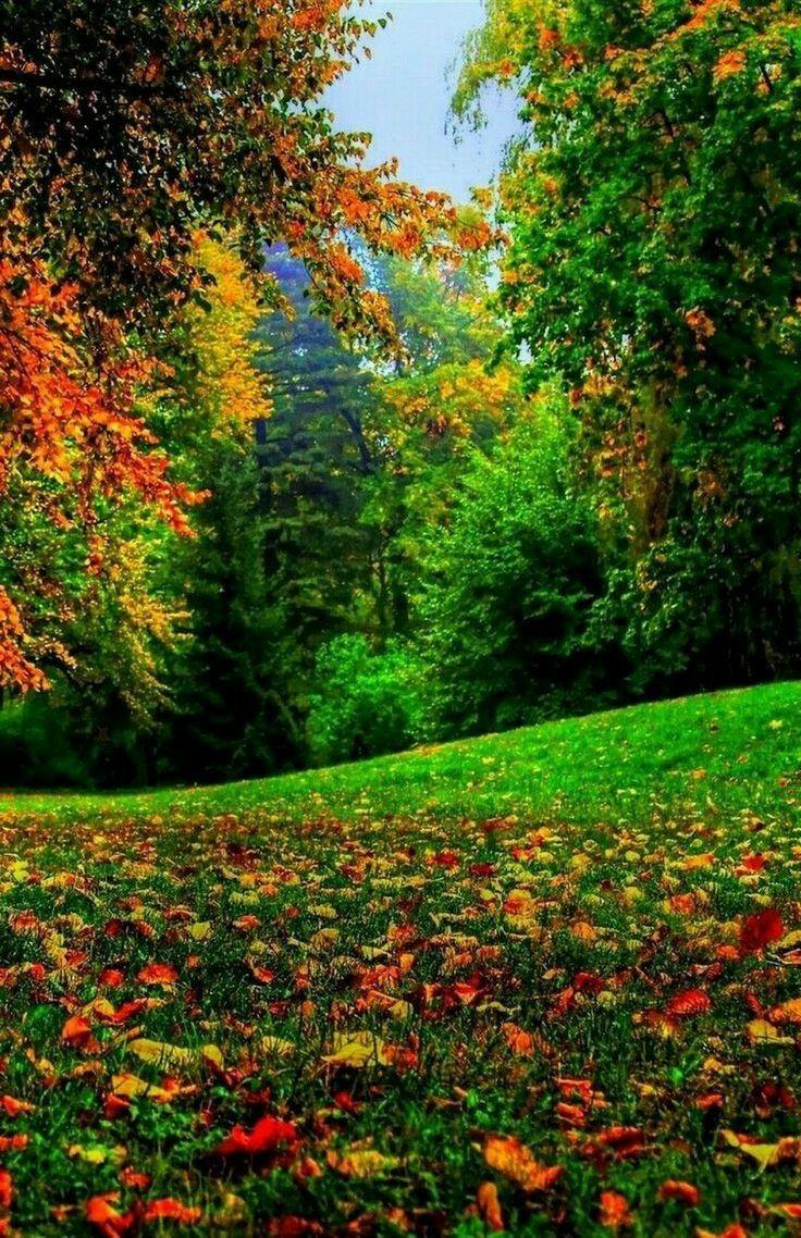 Pin By Carrie Buhler On Tajkepek Autumn Landscape Autumn Scenery Beautiful Landscapes
