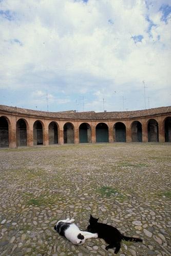 "The ancient market oval square ""Piazza Nuova"", Bagnacavallo, Italy"
