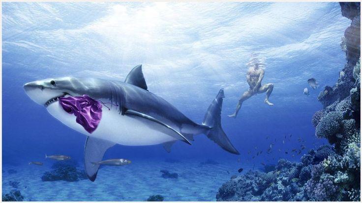 Funny Shark Wallpaper | funny shark wallpaper