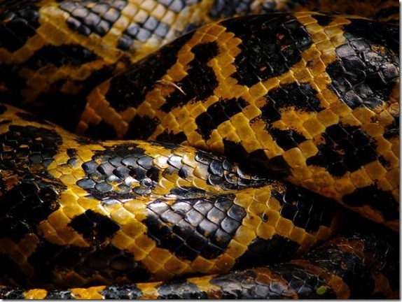 #snake skin photography by Joaquim Mello #yellow #black