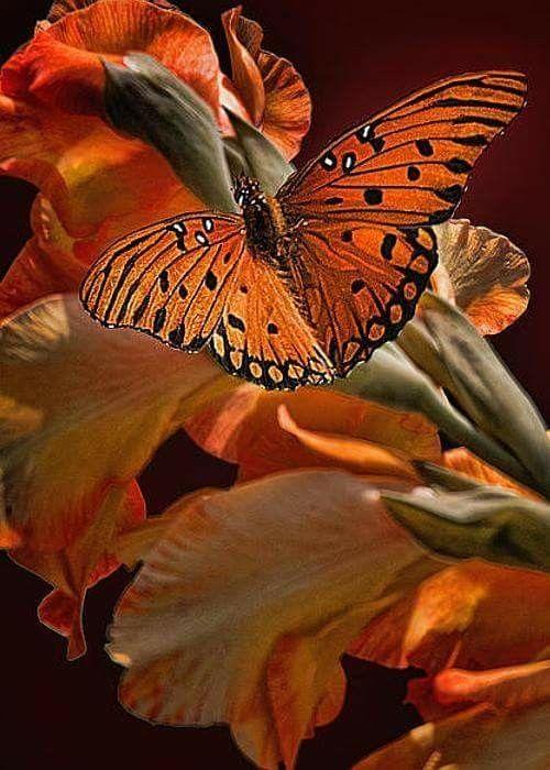# Butterflies