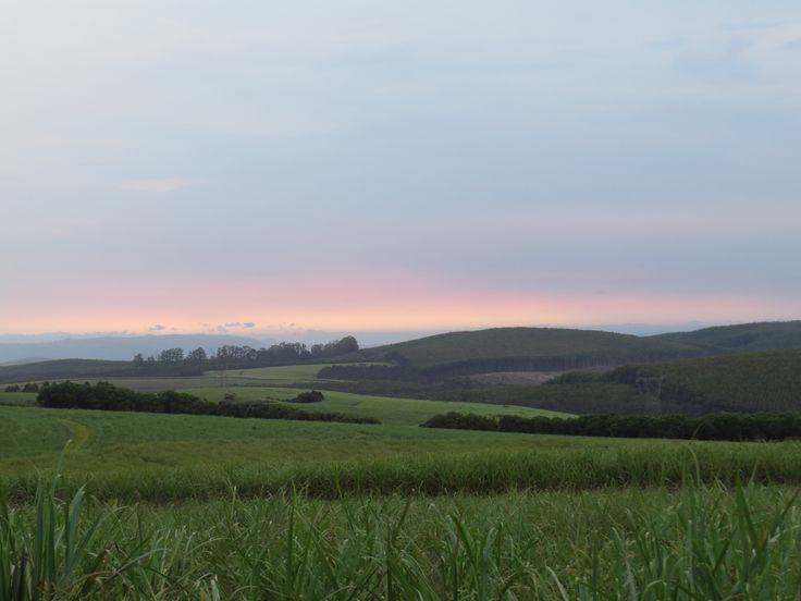 Merino farm, Melmoth Sugarcane farming in Zululand