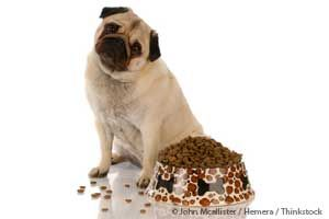 Conozca las recomendaciones de la Dra. Becker sobre las mejores y peores dietas para perros y gatos, que ayudaran a mejorar la calidad del alimento que le da a su mascota.