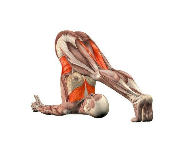 Halasana | Anatomía de yoga, Posturas de yoga y Yoga