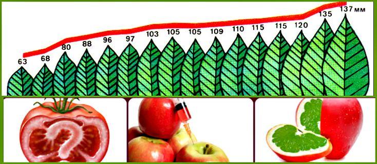 Что такое ГМО, продукты питания, в которых присутствуют генетически модифицированные организмы. Как создаются и чем опасны, список производителей