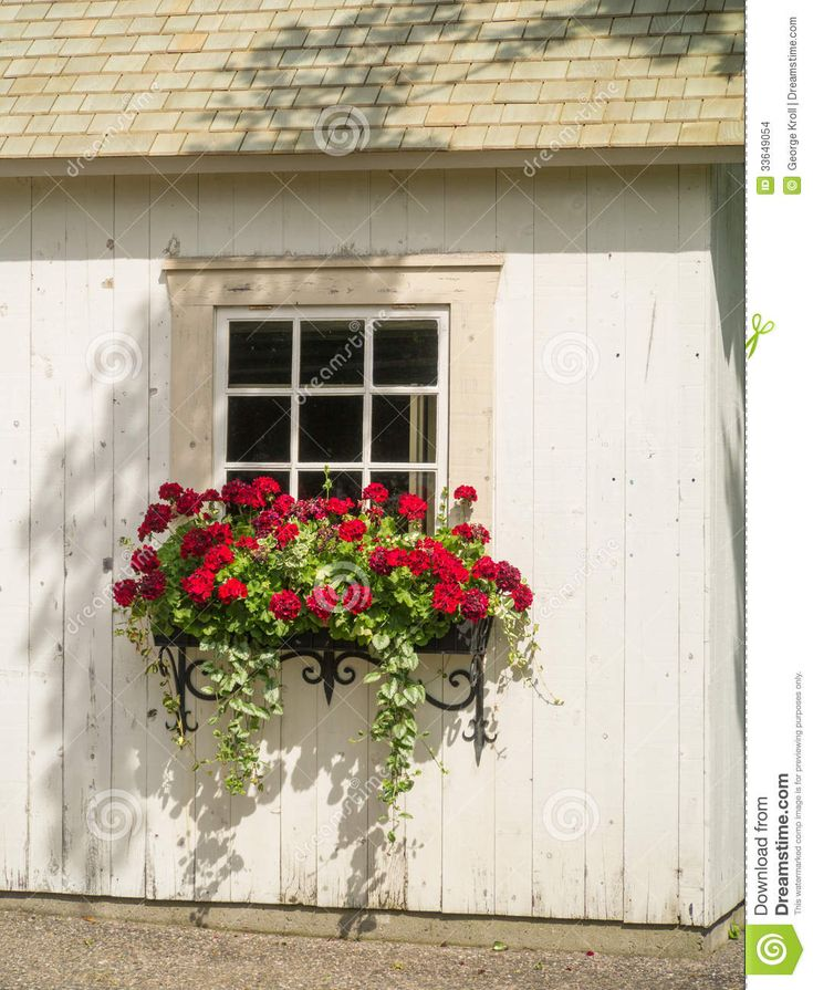 window with flowers - Google Search