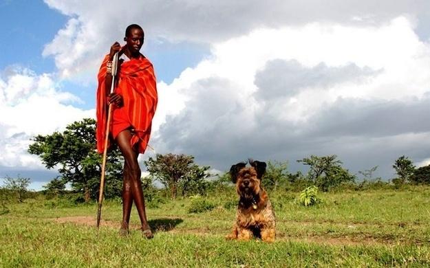 Oscar The Traveling Dog