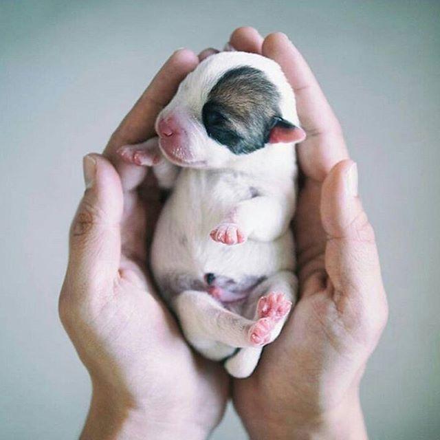 Little devil Doggy http://ift.tt/2fIhihE