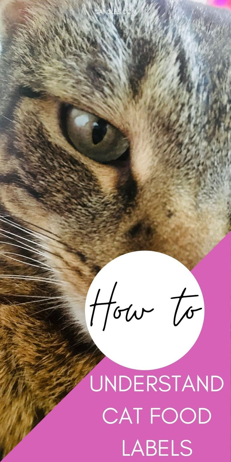 Is wet cat food bad for cats a closer look at 27