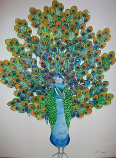 Hidden Peacock Wishes - made from water colour cut outs. Framed. Available