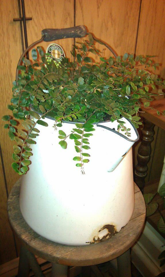Love,, love, love! Vintage coffee pot with plant