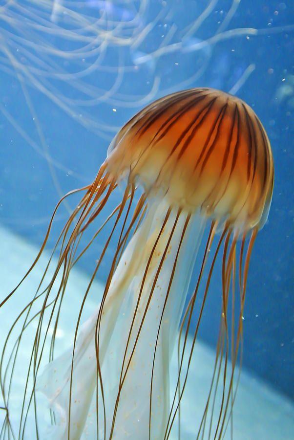 Mejores 424 imágenes de Critters en Pinterest   Animales acuáticos ...