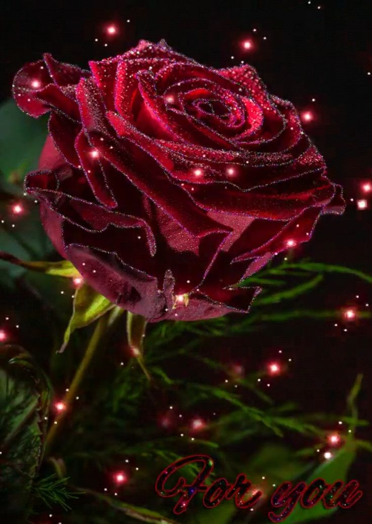 это картинки блестят розы красные спбгик