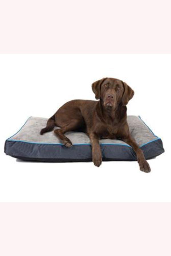Memory Foam Dog Bed In 2020 Dog Bed Memory Foam Dog Bed Memory Foam Pet Bed