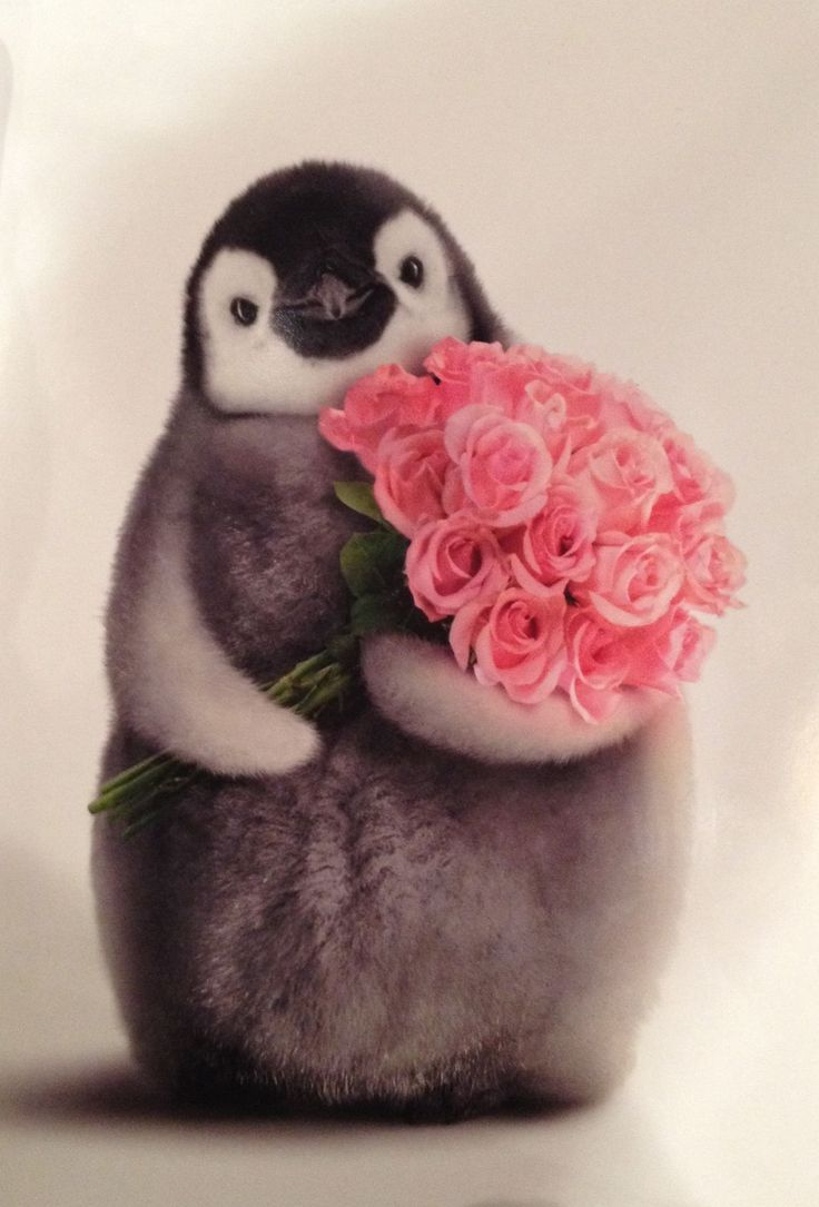 Cute penguins cute mighty pictures - Penguin With Flower Bouquet Funny Valentine S Day Card By Avanti Press In Home Garden Greeting Cards Party Supply Greeting Cards Invitations
