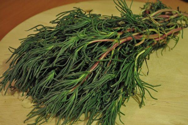 Ege Otlari Yemekleri Sicak Ot Herbs Food Cuisine