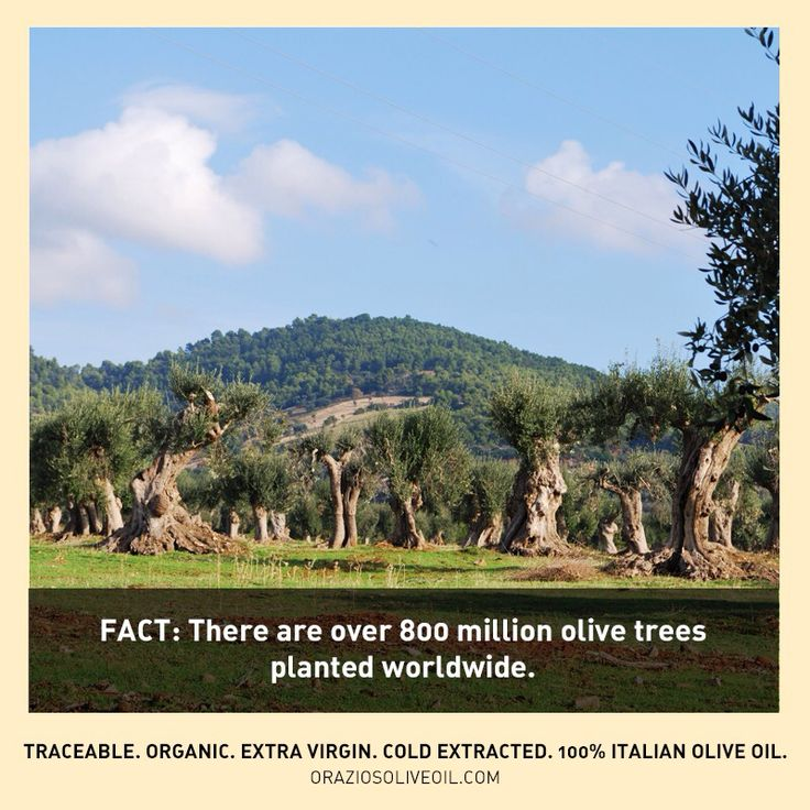 Unreal. #oliveoilfacts #evoo #oliveoil #olivetrees