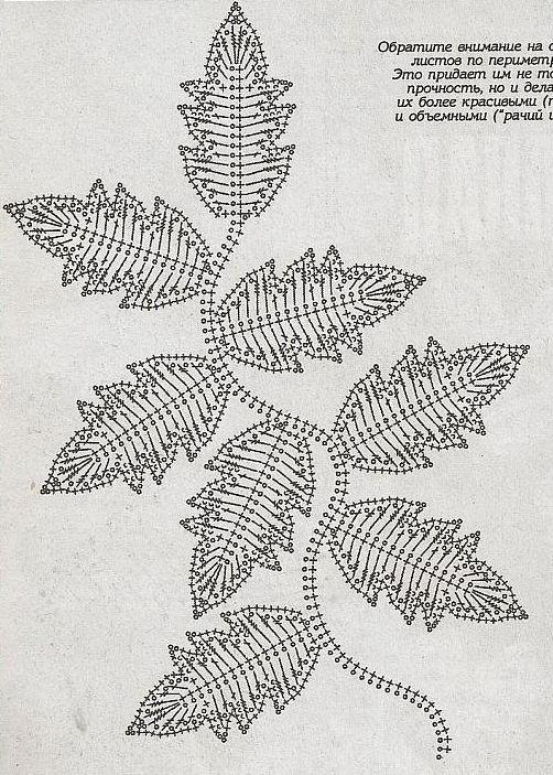 .Good Diagram...(Leaves)