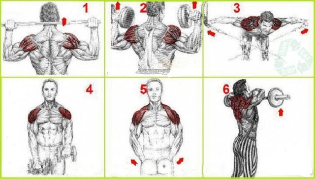 Build Big Shoulder Muscles