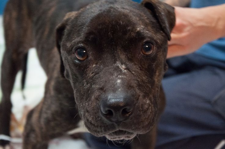 Starving Pit Bull Escapes Becoming Another Winter Weather Statistic | PETA's Blog | PETA