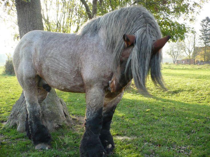 Rare horse breeds - photo#7