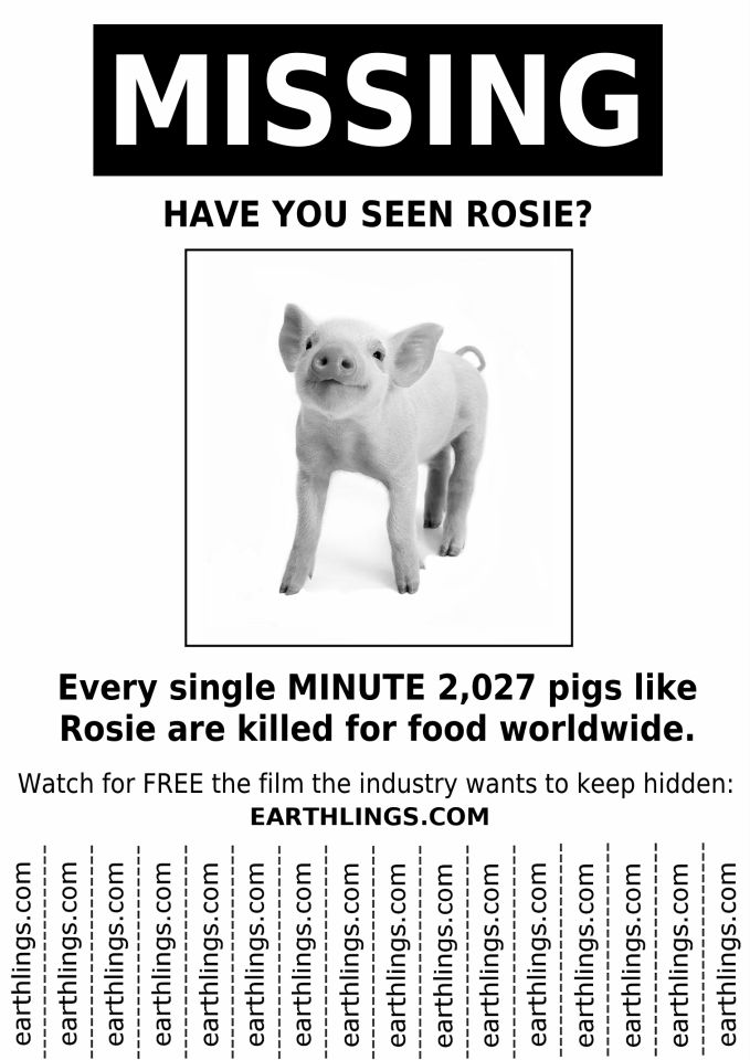 ... 485 Best Raising Awareness Ⓥ Images On Pinterest Vegans, Animal   Missing  Posters Template ...  Missing Posters Template