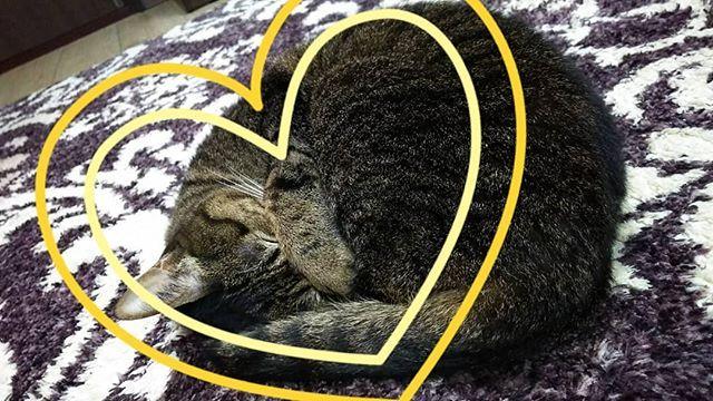 ・ 寒いよね~💦 ね~こはこたつで丸くなる~🎵 こたつじゃないけどな~ ・ ・ #愛猫 #あずき #見てるだけで #幸せ #癒しの時間 #寒いよな #ホットカーペット #暖房の温風 #1番当たる場所