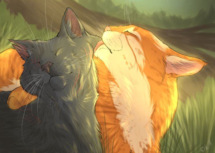 Yellowfang And Fireheart 17 Best images about Y...