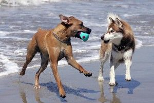 Dog Friendly Beaches On The East Coast - All Pet News