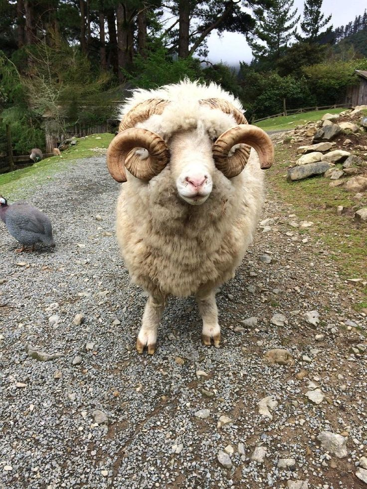 Staglands Wildlife Reserve (Wellington, New Zealand): Hours, Address, Attraction Reviews - TripAdvisor