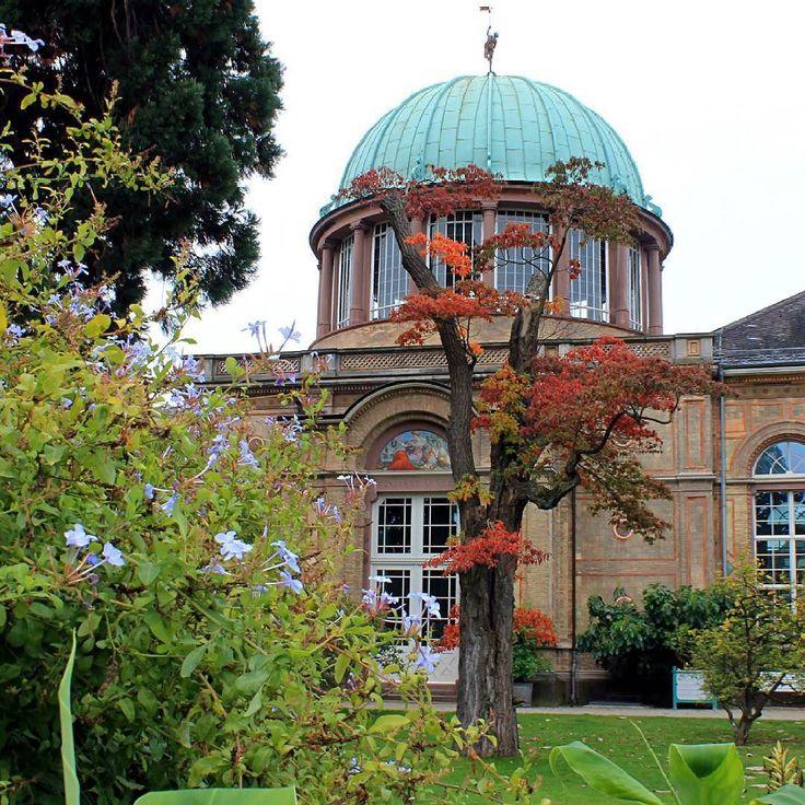 Cool Herbstliche Gr e aus dem Botanischen Garten in der kunsthalle ka er ffnet brigens am Oktober die gro e C zanne Ausstellung