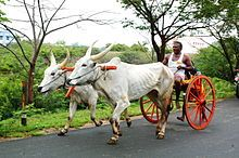 Ox-wagon - Wikipedia, the free encyclopedia