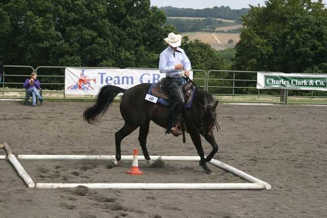 American Quarter Horse horse breed