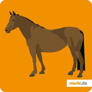 Alles über das Thüringer Warmblut   markt.de #pferd #portrait #infos #fakten #steckbrief #pferderassen