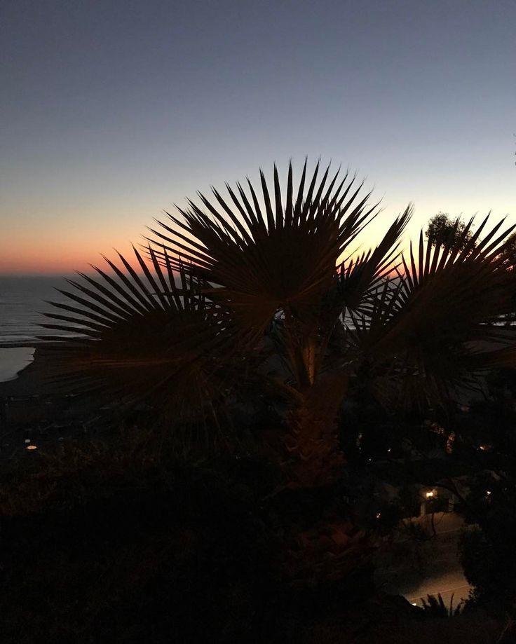 palm fauns against an evening sky explore hashtag j66labs j66 co a boutique digital