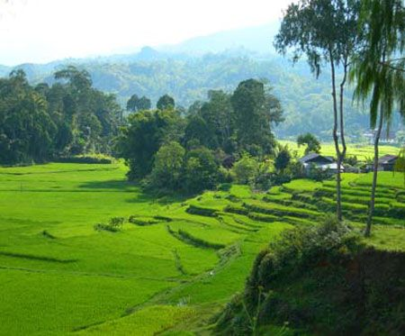 Toraja land tour 3 days from Makassar airport and overland trip by private car