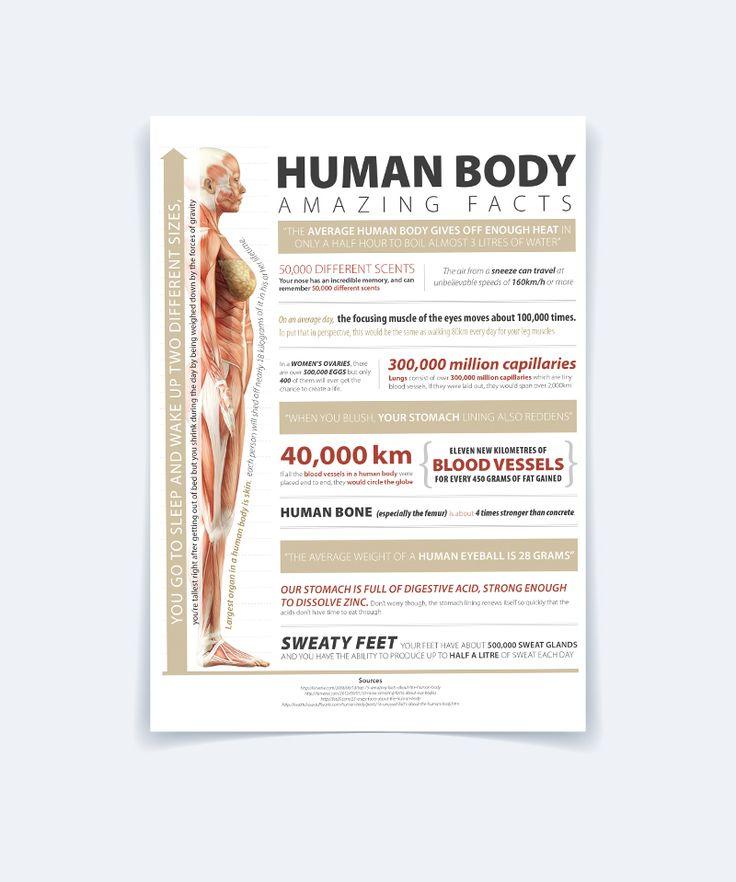 Human Body - Infographic 2 on Behance