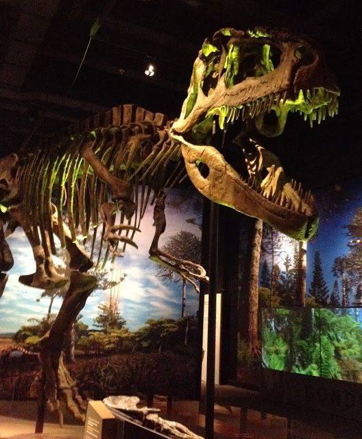 143 best images about road trips i 39 ve gone on on Dinosaur museum ohio