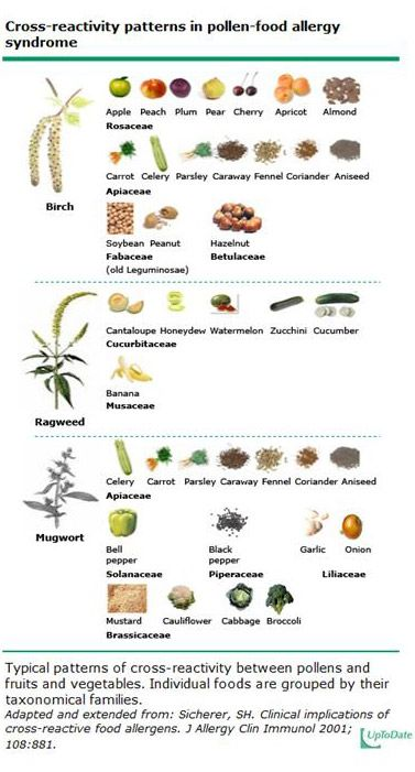 some of the many possible pollen-food allergy cross reaction patterns, according to a posting on the UCLA Health System website