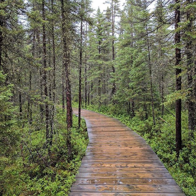 Spruce Bog, Algonquin. 1.5 km loop boardwalk trail