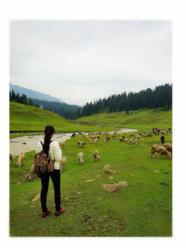 """Kashmir is one of the most beautiful places on earth(paradise on earth).the region has been dubbed disputed territory""""between india n pakistan since the partition of india in 1947. *Gulmarg*,June 2017..!"""